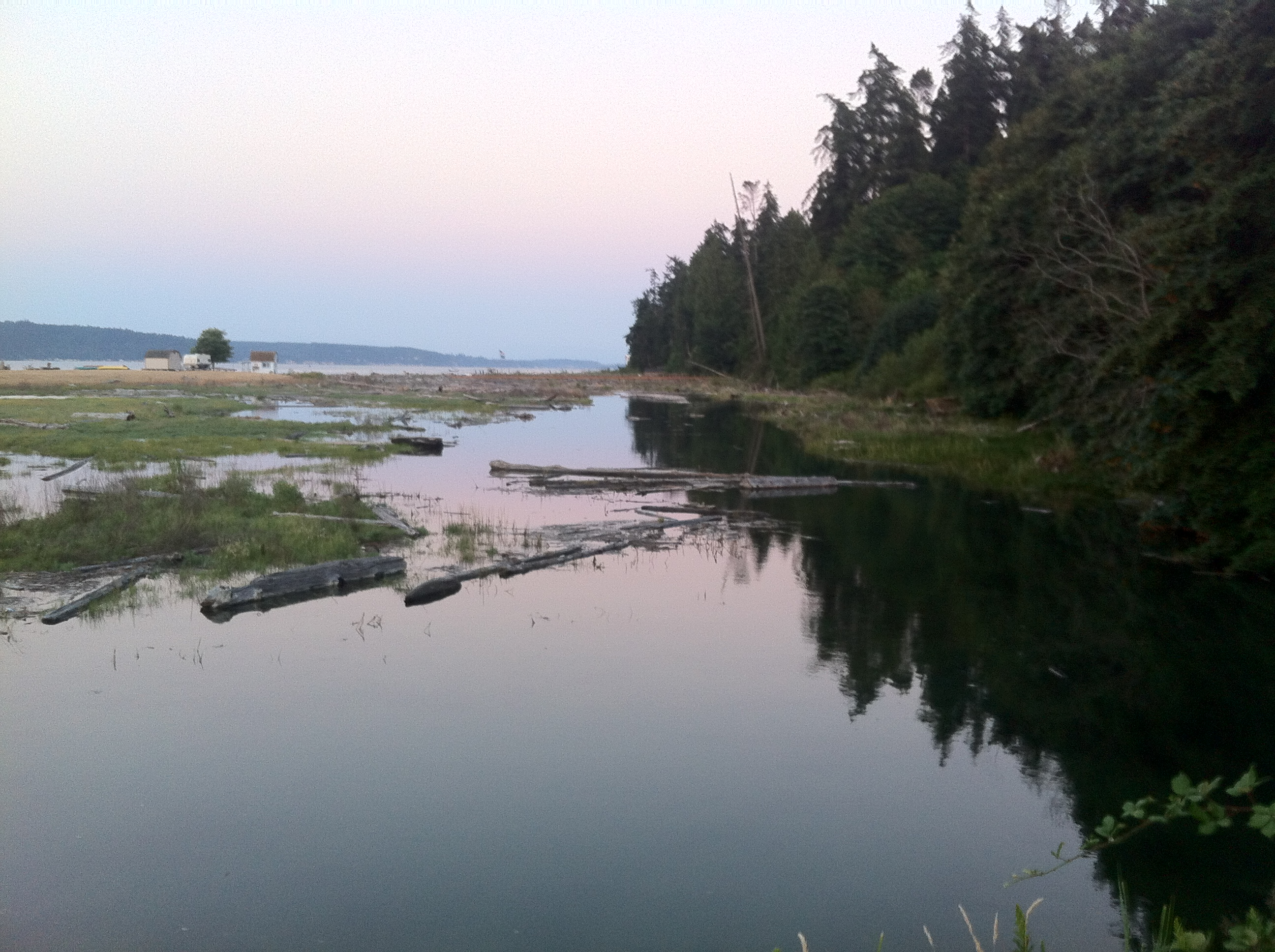 The mission of Sunnyshore Studio: sharing the beauty of Camano Island with the world