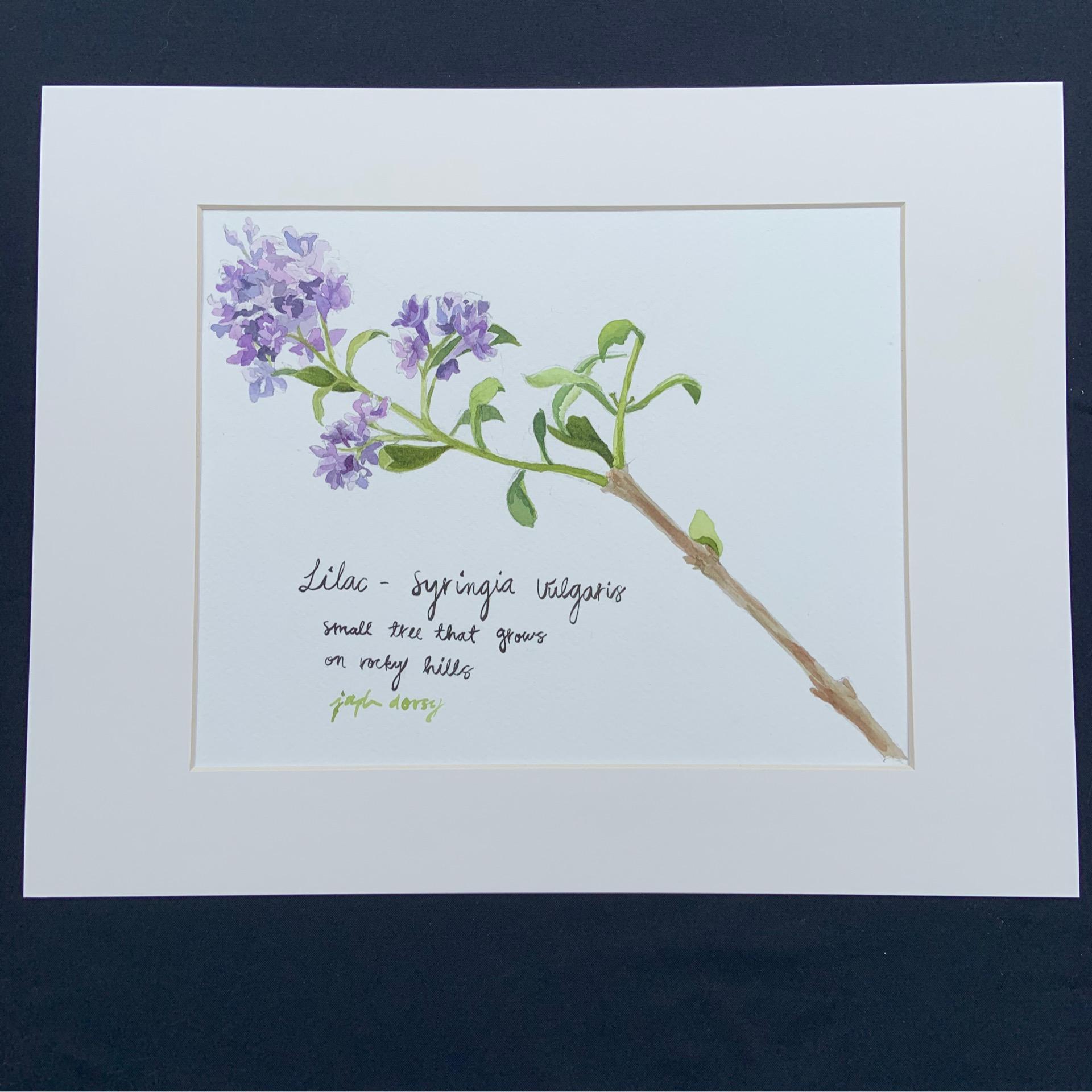 Honeydew Lilac